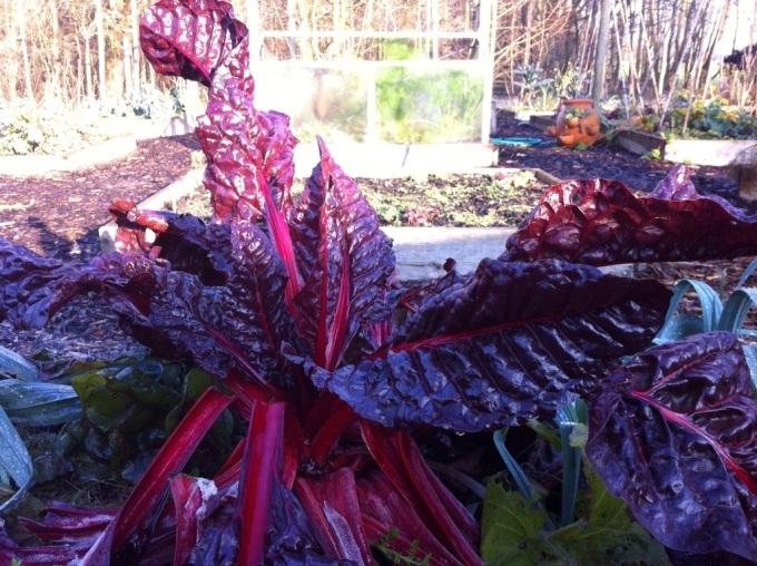 beet the pounti
